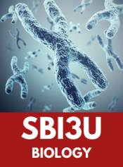 Grade 11 Biology image